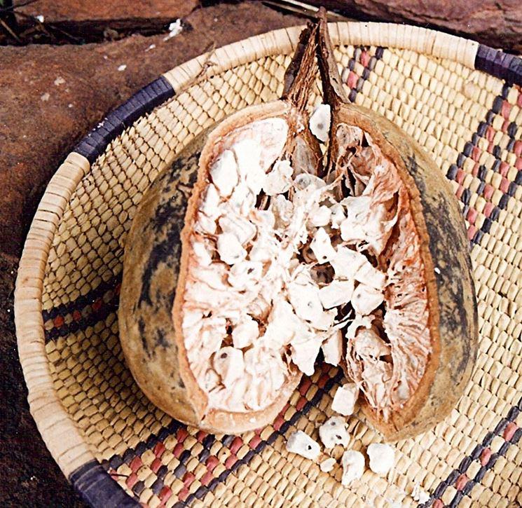 interno di un frutto di baobab