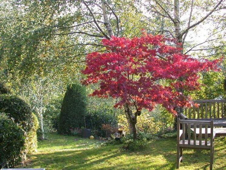 Creare un giardino con alberi caducifoglie alberi come - Alberi particolari da giardino ...