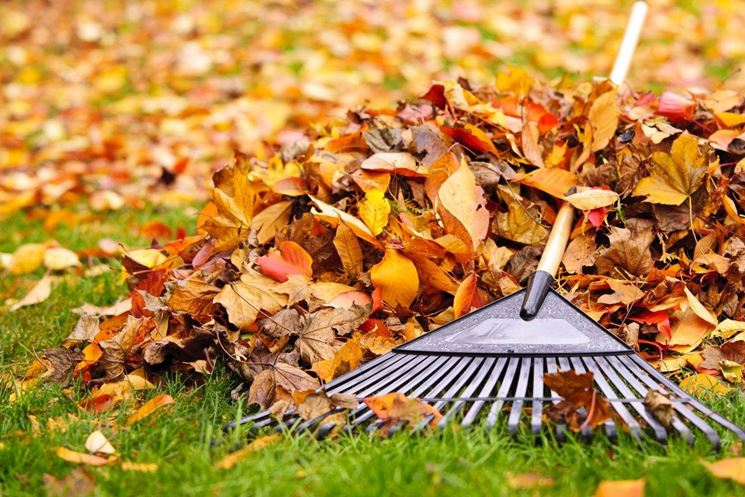Le preziose foglie autunnali