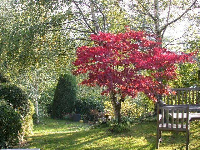 Creare un giardino con alberi caducifoglie alberi come for Creare un giardino semplice