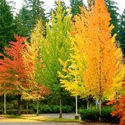 Creare un giardino con alberi caducifoglie alberi come for Gli alberi sempreverdi