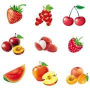 frutto del frassino