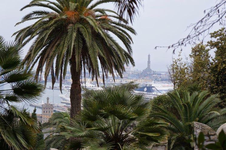 Palma cycas revoluta alberi caratteristiche della palma for Palma pianta