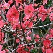 pianta con fiori rossi