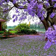 Esempio di albero da giardino