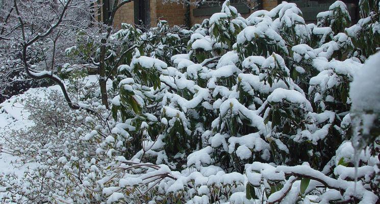 Albero da giardino sotto la neve
