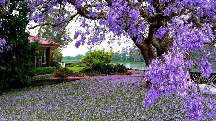 Vendita alberi alberi alberi vendita - Alberi da giardino piccoli ...