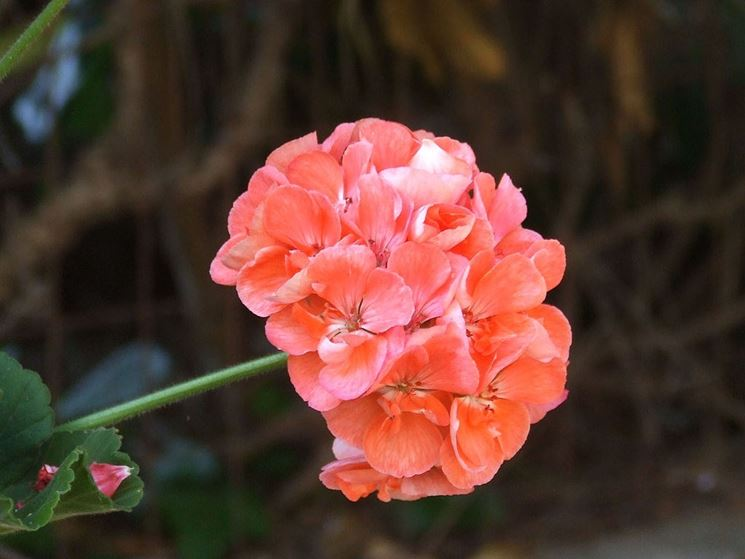 fiori estivi bulbi fiori estivi giardino
