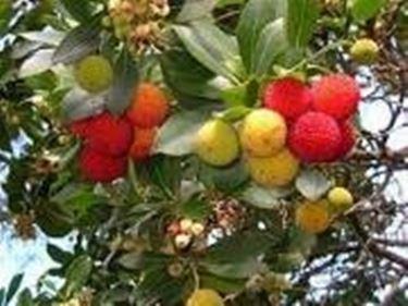 Alberi da giardino domande e risposte giardino - Alberi da giardino di piccole dimensioni ...