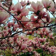 alberi da giardino