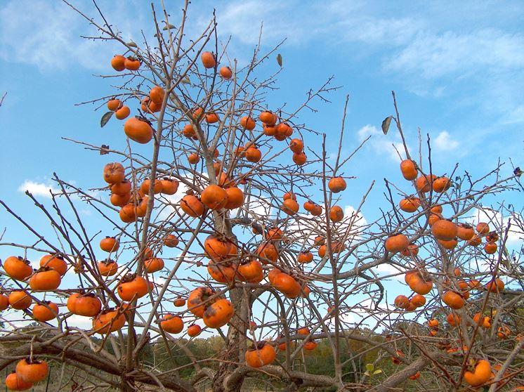 foto piante da frutto