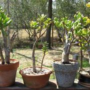 trapiantare piante