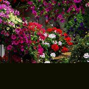 Un balcone fiorito