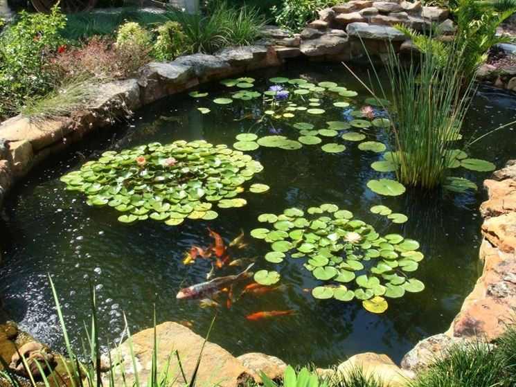 Costruire un laghetto piante acquatiche come costruire for Piante da laghetto