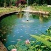 piante acquatiche laghetto