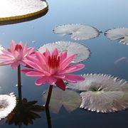 piante d acqua