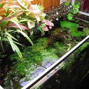 piante galleggianti acquario