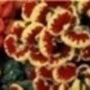 campanelle fiori