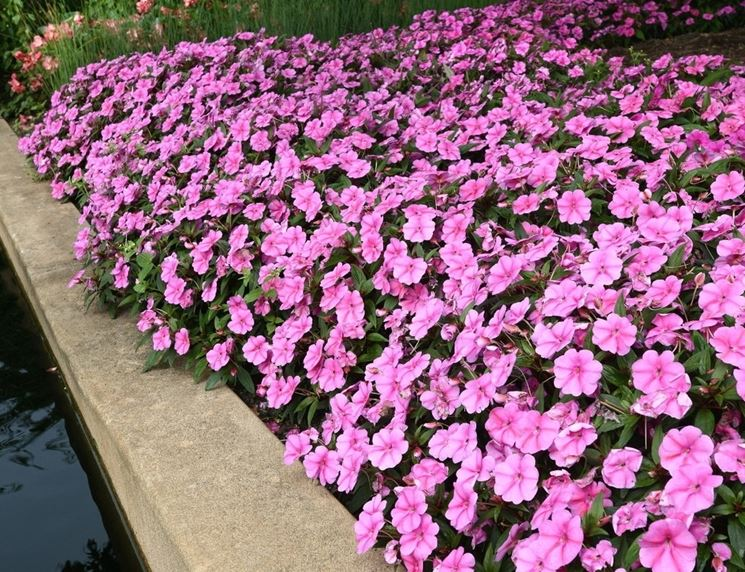 Pianta fiori di vetro