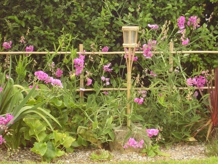 coltivazione Casanaute.com
