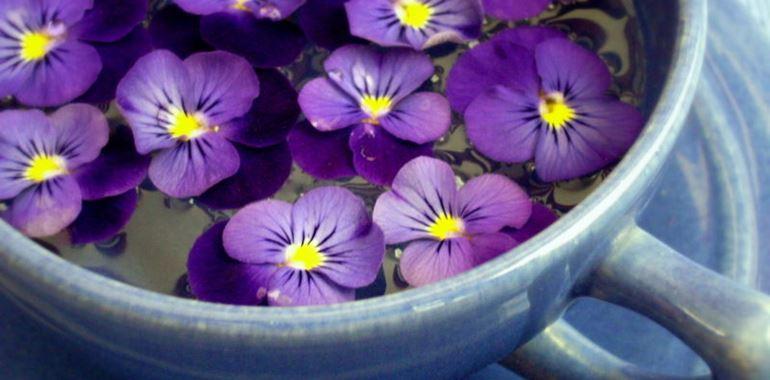 <h6>Viola del pensiero</h6>La viola del pensiero � una piccola pianta erbacea molto graziosa. Il suo nome scientifico � Viola tricolor; appartiene al genere Viola, che comprende circa 400 specie, e alla famiglia delle Violaceae.