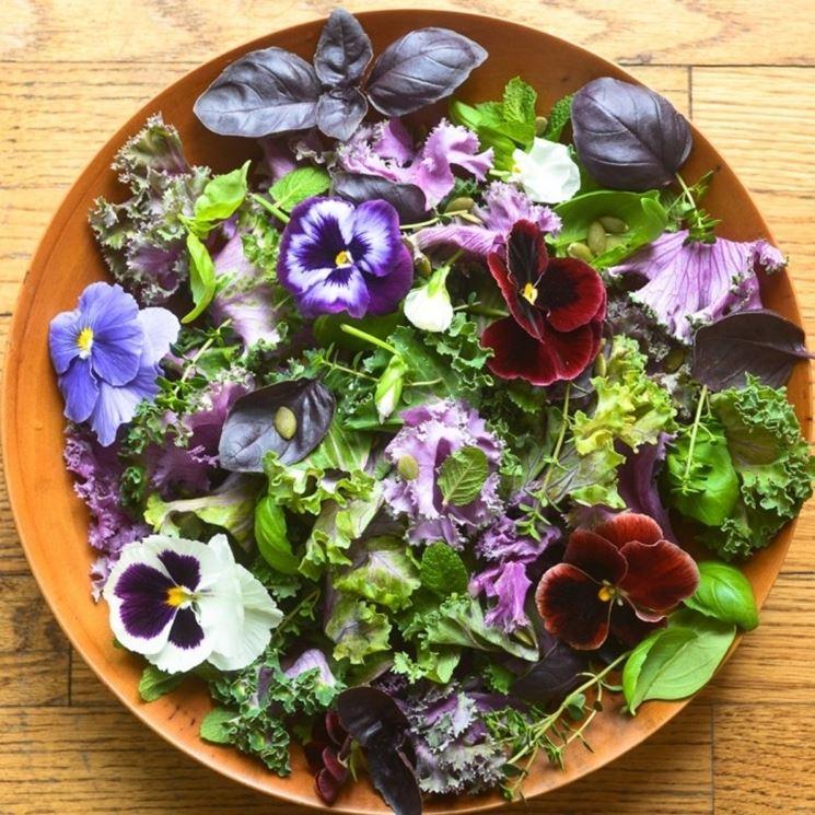 fiori di viola commestibili
