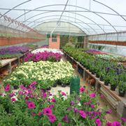 Esempio di vivaio con piante in serra