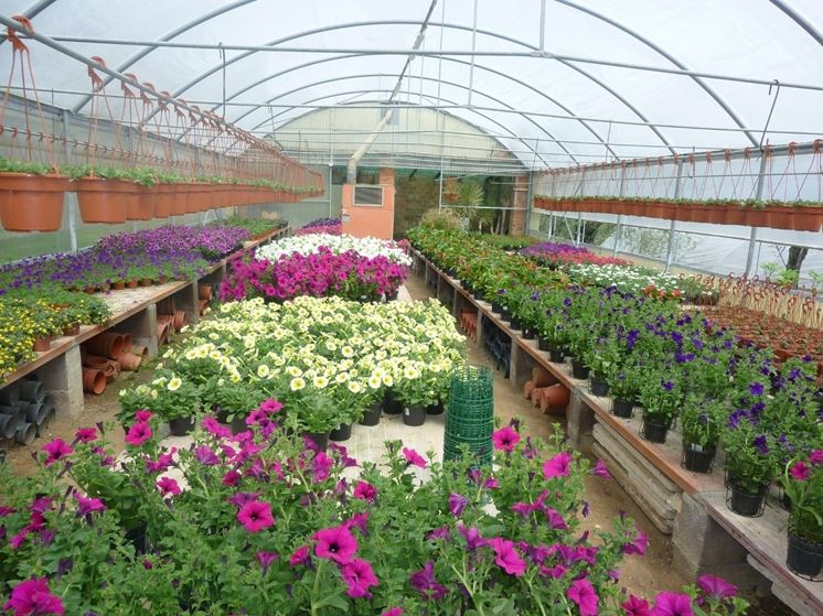 vivai piante piante annuali vivai piante giardino