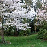 Alberi da fiore in un giardino