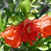 alberi da fiore