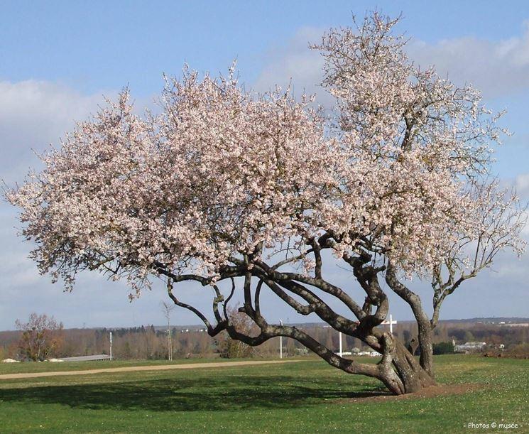 Alberi in fiore piante da giardino conoscere gli - Alberi particolari da giardino ...