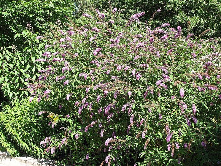 Pianta giardino fiori
