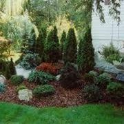Cespugli sempreverdi piante da giardino for Alberi piccoli da giardino