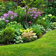 cespugli sempreverdi - piante da giardino - caratteristiche dei ... - Piante Sempreverdi Da Giardino Basse