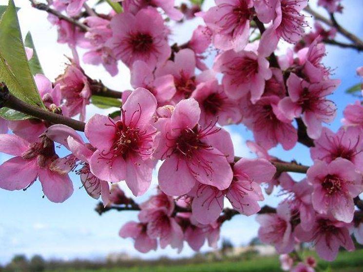 fiori da giardino giardino fiorito : Indietro Uccellino Sul Ramo Di Pesco Beautiful Scenery Photography
