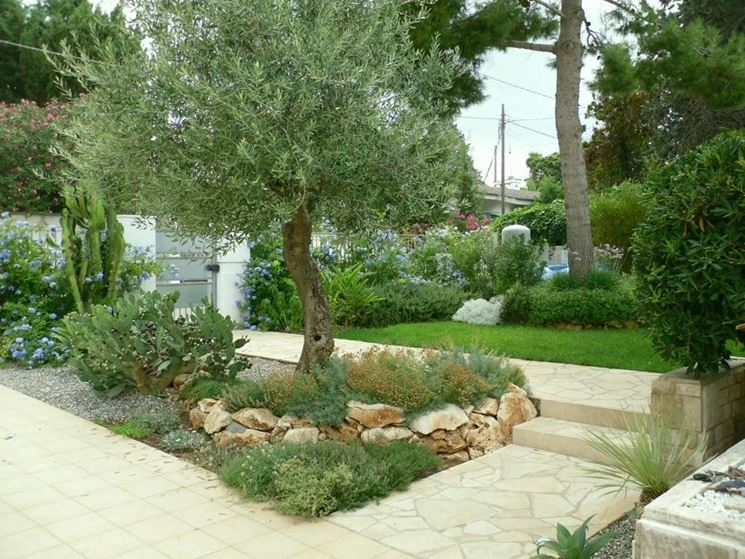 Fiori giardino piante da giardino come scegliere i for Fiori sempreverdi da giardino