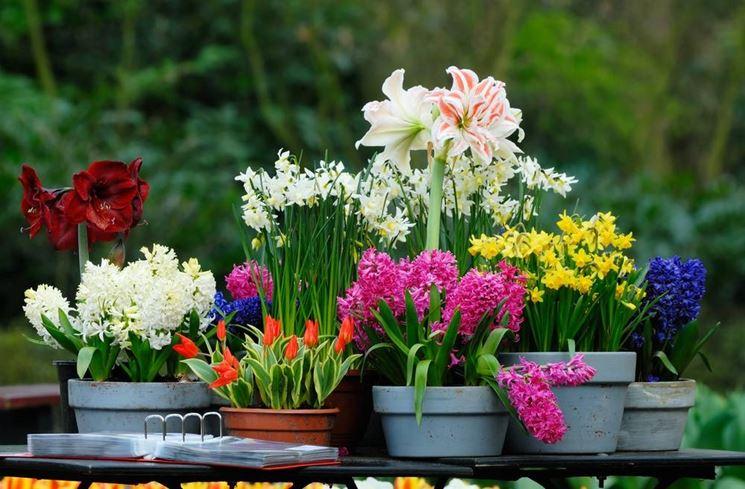 Fiori invernali piante da giardino caratteristiche dei for Fiori bulbi