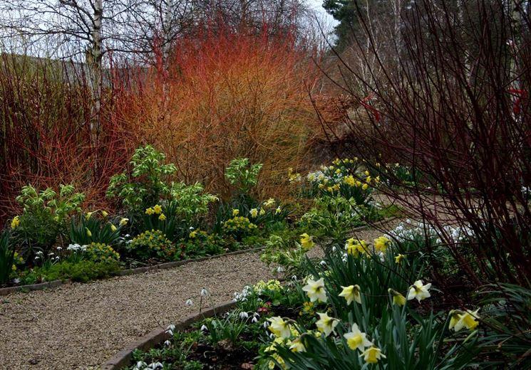 Giardino con fiori invernali