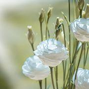 Fiori lisianthus bianco