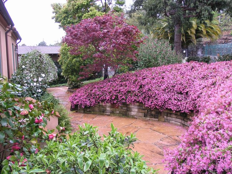 Pianta giardino