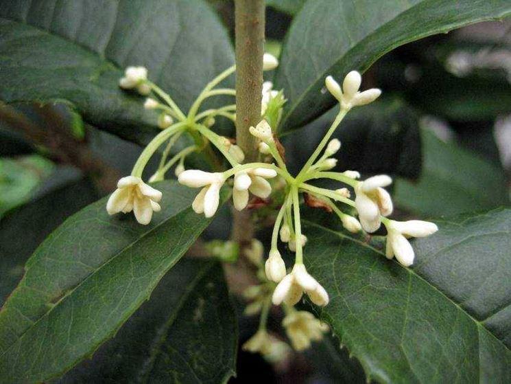 dettaglio sui fiori della pianta