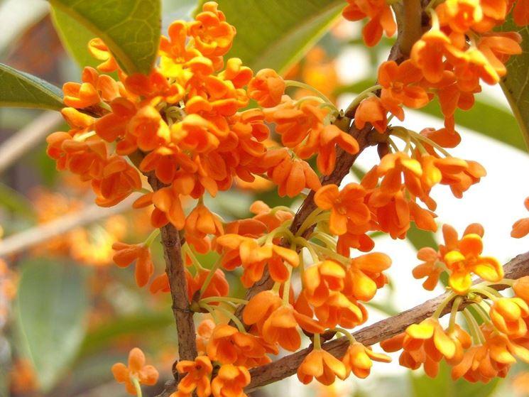 i delicati fiori arancioni profumatissimi
