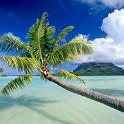 pianta della palma
