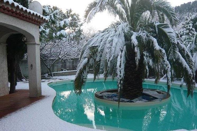Piante Palme : Palma pianta piante da giardino