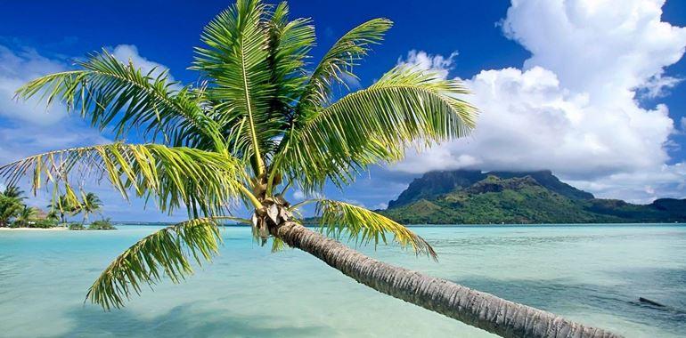 <h6>Palma pianta </h6>Una pianta che sapr� portarvi in paesi lontani nel vostro giardino. Segreti e trucchi per la coltivazione della Palma.