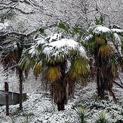 pianta palma