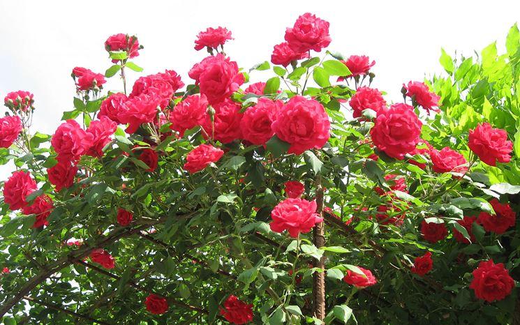 piante fiorite piante da giardino piante che producono