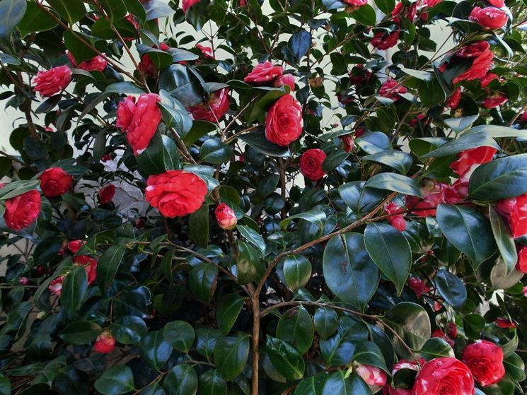 Piante invernali piante da giardino caratteristiche for Piante che fioriscono in inverno