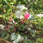 piante invernali piante da giardino caratteristiche