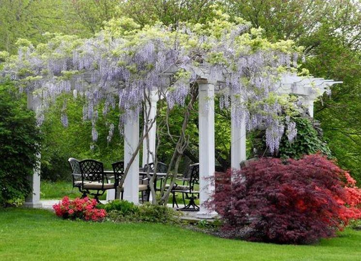 Piante ornamentali da giardino piante da giardino come for Alberelli da esterno